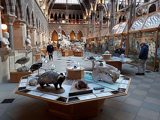 Natural History Museum in Oxford © HTW Berlin / Tobias Nettke